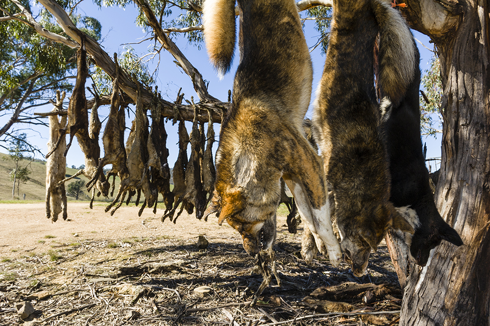 animal pest control australia