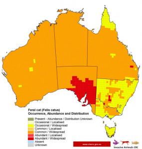 Feral cat populations in australia