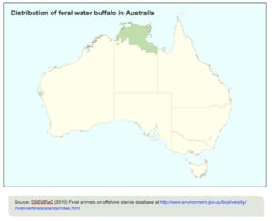 water buffalo australia
