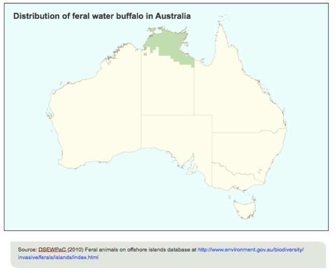 water buffalo, distribution, australia