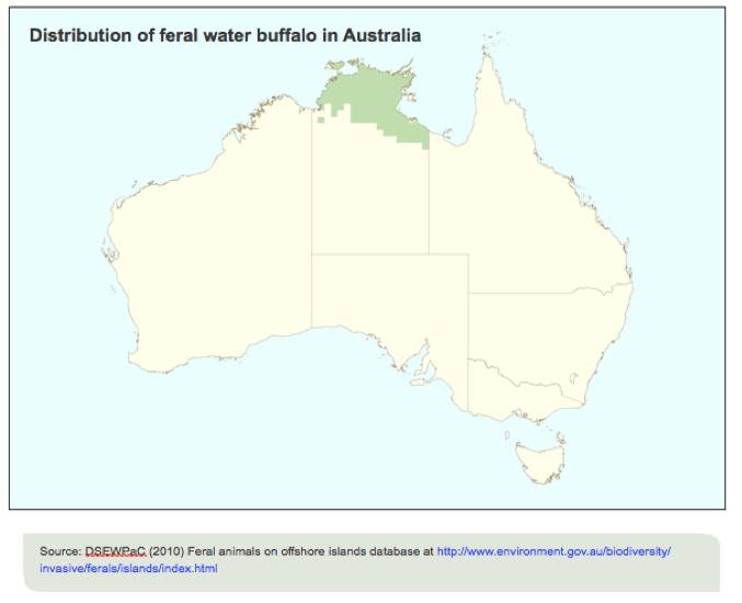 water buffalo, distribution, australia